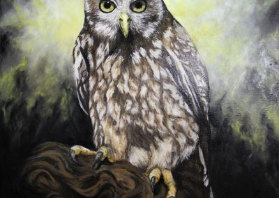 Amanda Burns - The Barking Owl's Plight 2019