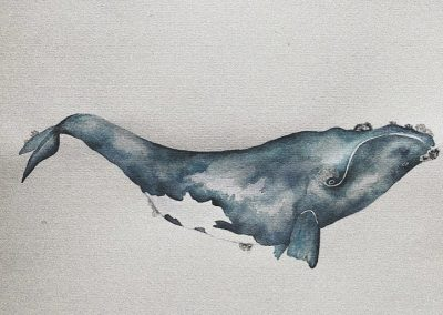 Jane Higgins - Whale